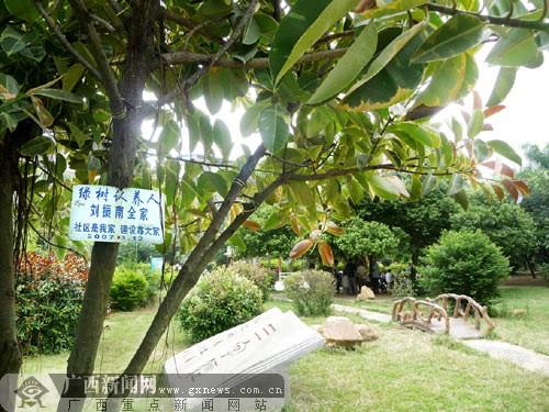 这棵树当年是居民彭玉梅的母亲亲手种的,社区推行树木认养后,彭女士的