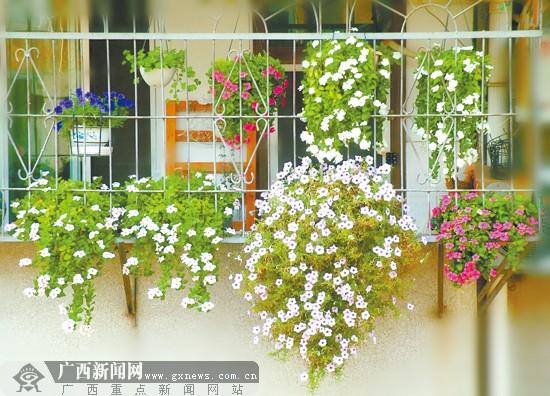 女子精心装扮袖珍空间 小阳台四季花香 图图片