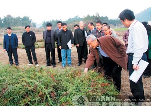 中科院专家实地指导广西大环江流域土壤污染修复