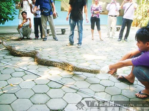 北京动物园百米巨蟒