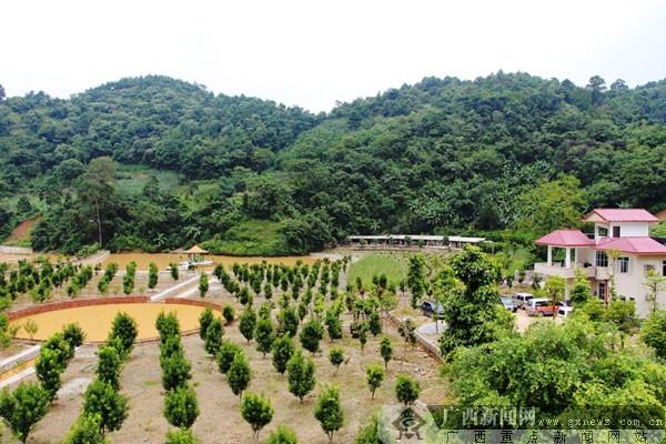 杨郑宝) 位于大青山南麓,距离越南边境线2公里的龙州县彬桥乡安镇村板