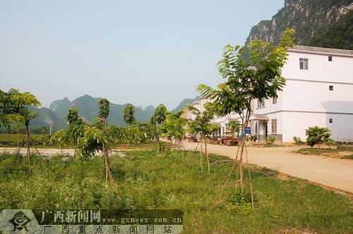 亚热带珍贵树种的种植