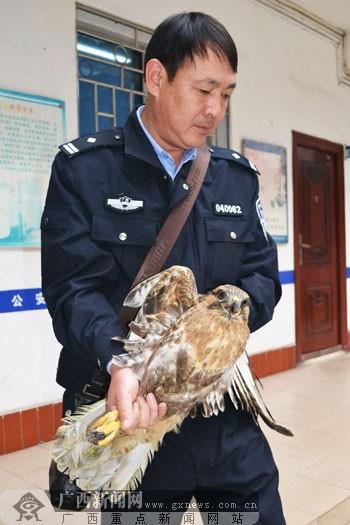 属国家二级重点保护动物-广西