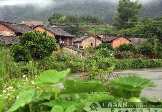 钦州壮乡村民清洁家园我先行 构筑靓丽新村风景线