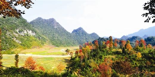 周六去田林看美景图片