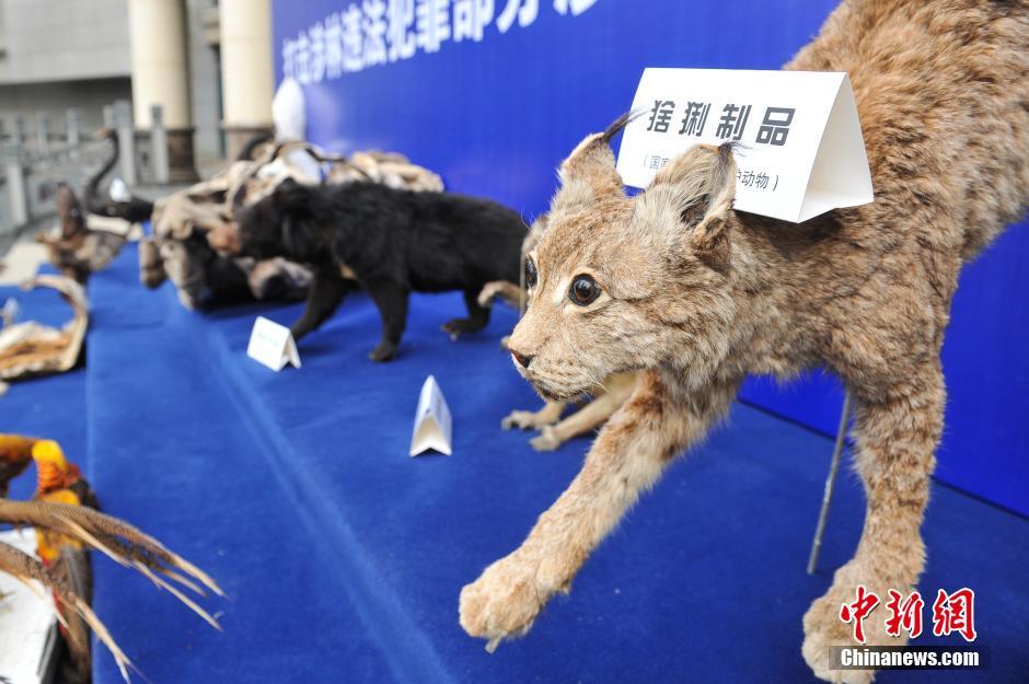 云南破获十年最大走私贩卖野生动物制品案-广西新闻网