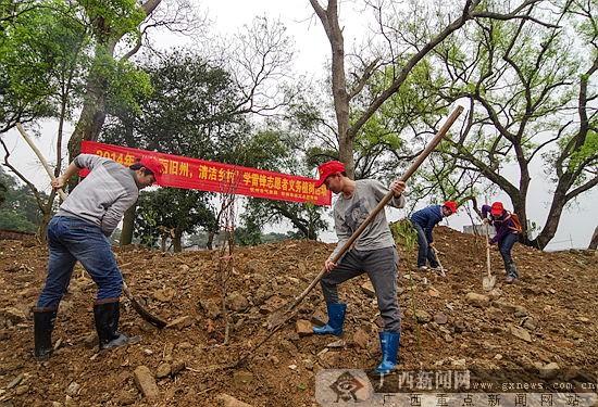 3月13日,青年志愿者在灵山县旧州镇石桥李屋村种植树苗.黄帅 摄