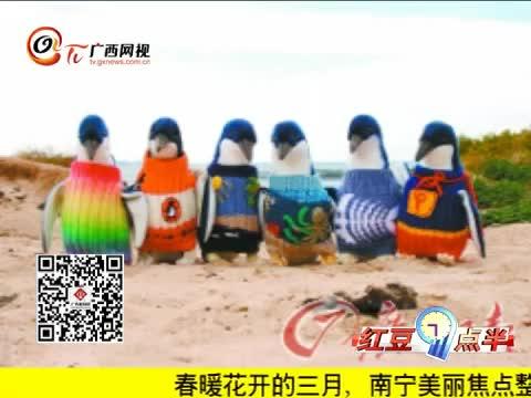 澳大利亚企鹅穿毛衣防油污