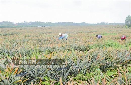 钦州市台湾农民创业园特色农产品荟萃