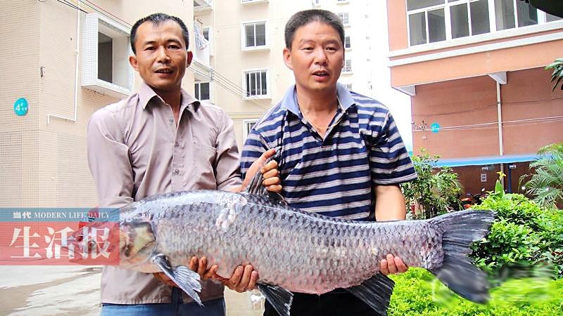 邕江10种鱼类从常见变罕见 濒危鱼你见过哪几种?