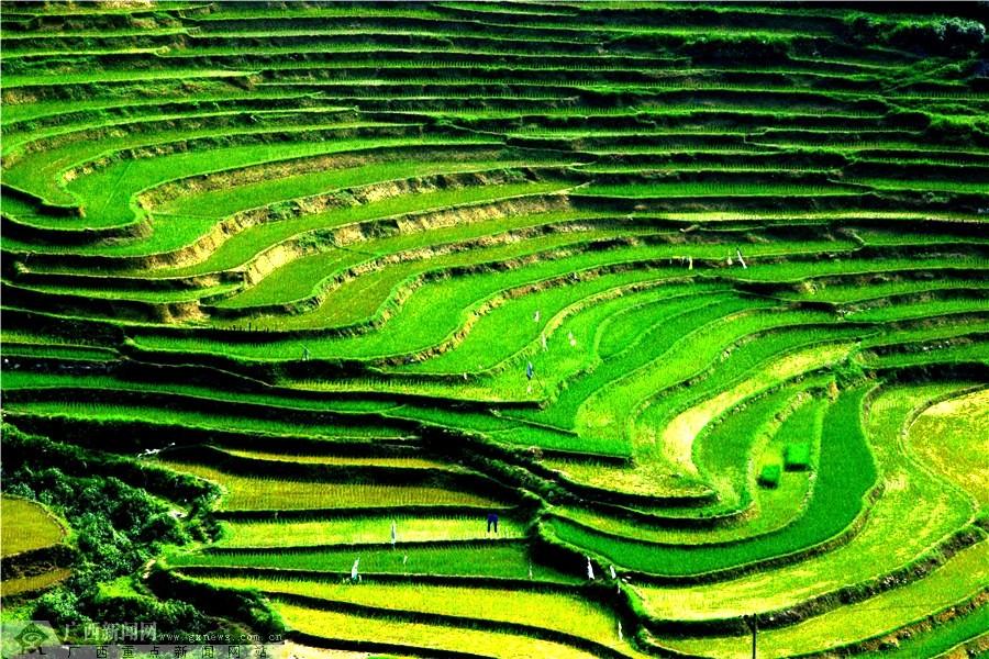 壁纸 成片种植 风景 植物 种植基地 桌面 900_600