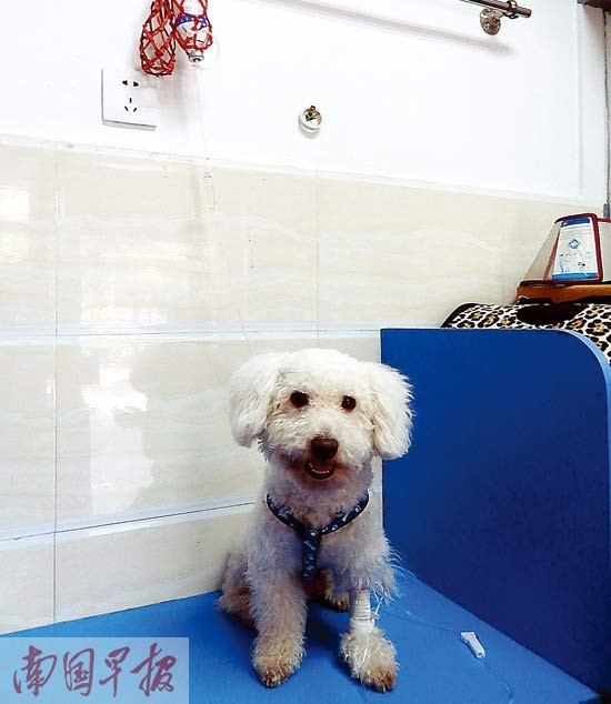 """超三成宠物医院是陋嘢店 带宠物看病防""""南郭先生"""""""