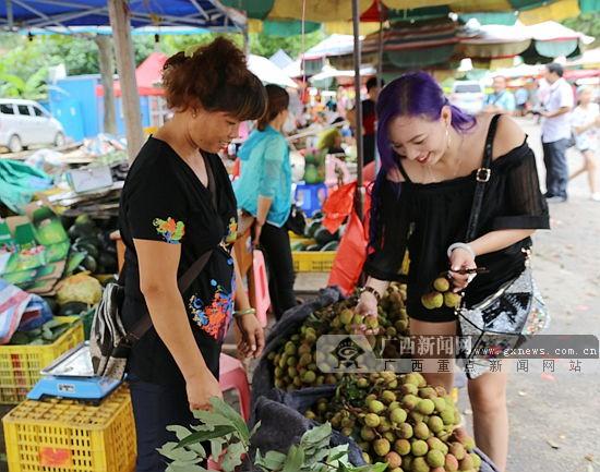 6月下旬灵山荔枝将大批上市 市民可体验自摘乐趣