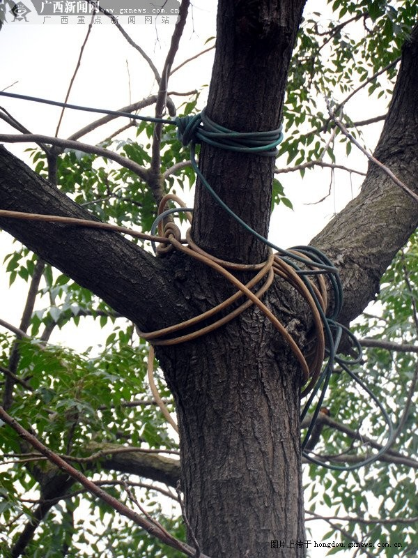铜线艺术树木图片
