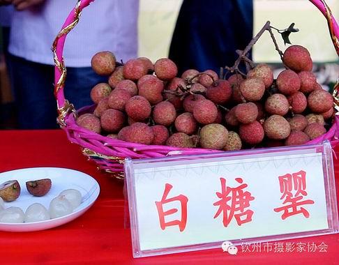 你品尝过多少种广西钦州的荔枝?