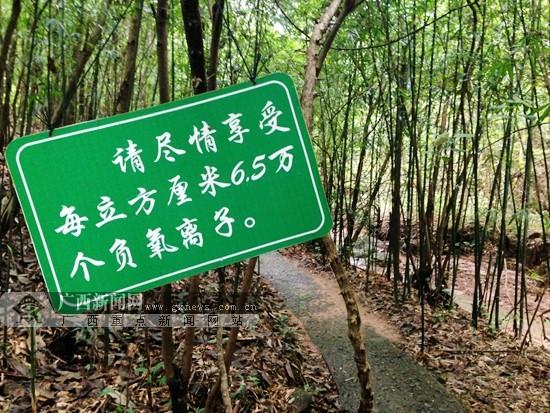 网友畅游钦州八寨沟 尽享潺潺流水天然氧吧(组图)