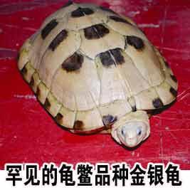 广西手机报9月16日上午版