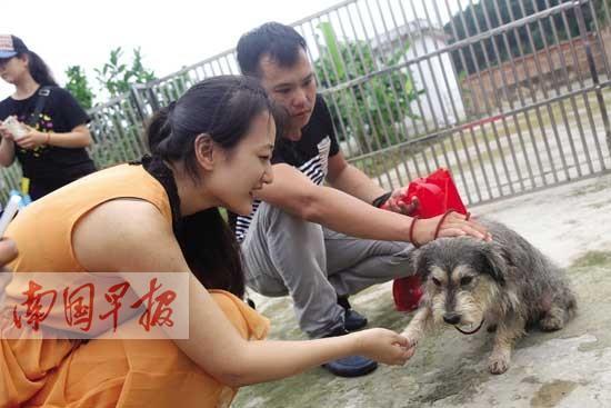 南宁市养犬管理条例修订 违规养狗犬只或被扣押