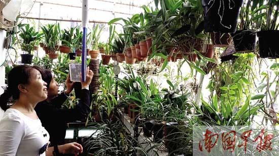 """南宁评出""""美丽阳台"""" 有人竟种出220多盆兰花(图)"""