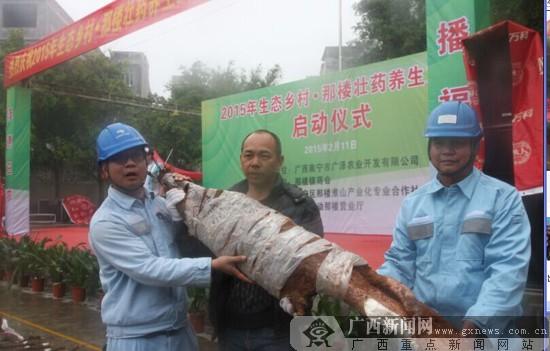 """邕宁那楼镇举行""""生态村子·那楼壮药养生文化节"""""""