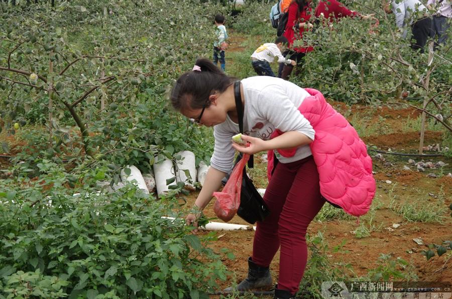 高清:百余名网友参加红豆植树活动 摘野菜品珍果(7/15)