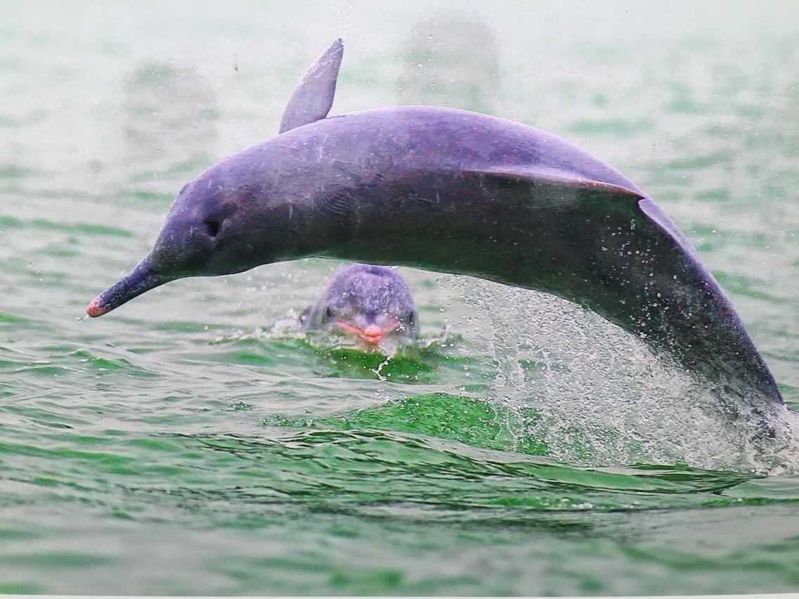 壁纸 动物 海洋动物 桌面 1136_852