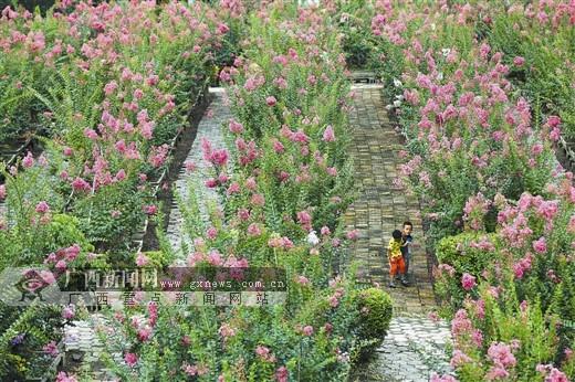 南宁兴宁区:土地流转 开发花卉苗木种植基地