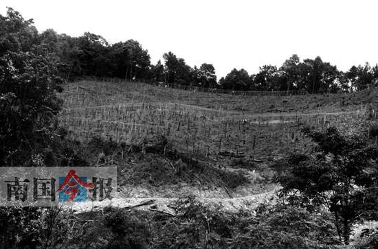 鹿寨公益林接二连三遭到滥伐 事发拉沟自然保护区