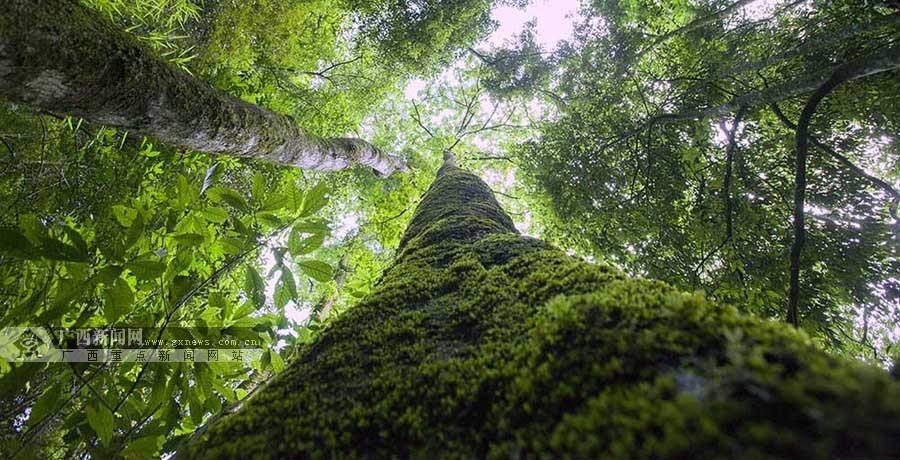 壁纸 风景 森林 桌面 900_460