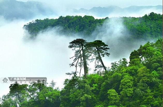 微信头像森林风景