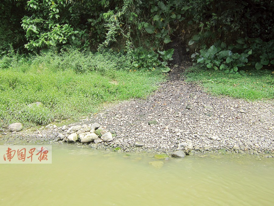 養殖污染困擾玉林兩大江河:死豬漂浮 糞便直排