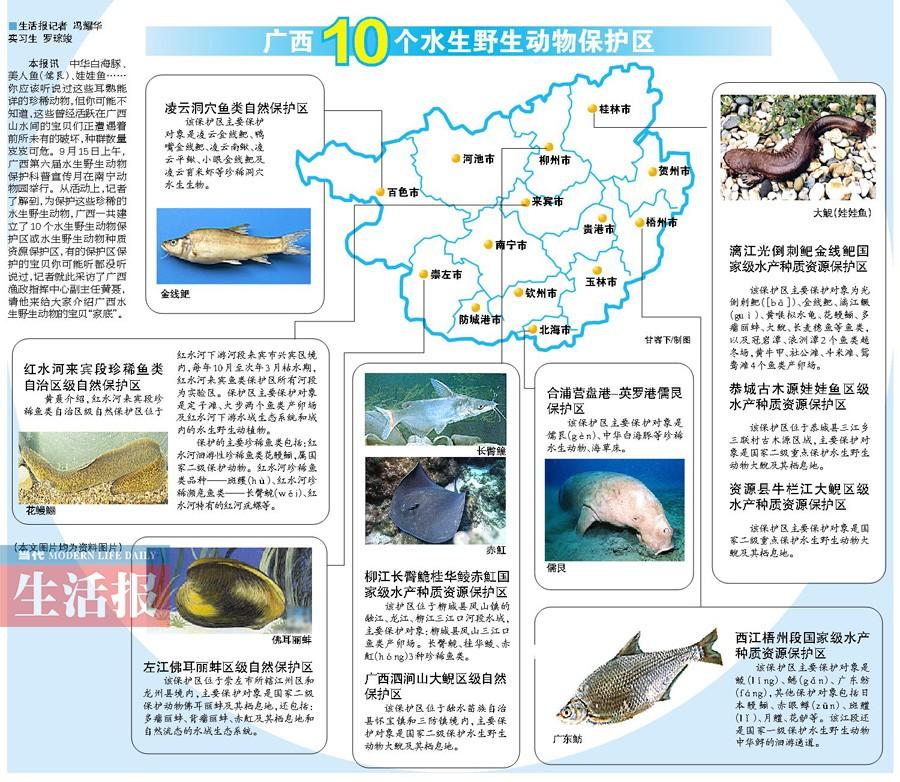 广西新闻网-当代生活报讯(记者 冯耀华 实习生 罗琮竣)中华白海豚、美人鱼(儒艮)、娃娃鱼……你应该听说过这些耳熟能详的珍稀动物,但你可能不知道,这些曾经活跃在广西山水间的宝贝们正遭遇着前所未有的破坏,种群数量岌岌可危。9月15日上午,广西第六届水生野生动物保护科普宣传月在南宁动物园举行。从活动上,记者了解到,为保护这些珍稀的水生野生动物,广西一共建立了10个水生野生动物保护区或水生野生动物种质资源保护区,有的保护区保护的宝贝你可能听都没听说过,记者就此采访了广西渔政指挥中心