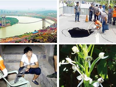 9月27日焦点图:广西发现珍稀兰花新种