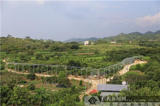 """钦州钦北区:打造现代农业生态旅游新""""丝路""""(图)"""