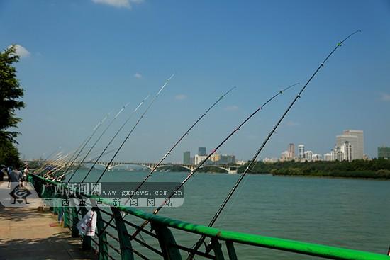 柳江河畔密密麻麻的釣竿形成了一道獨特的風景.