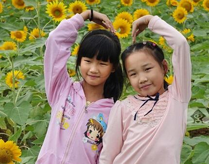 高清:桂林园博园花开正好 金色花海值得一看