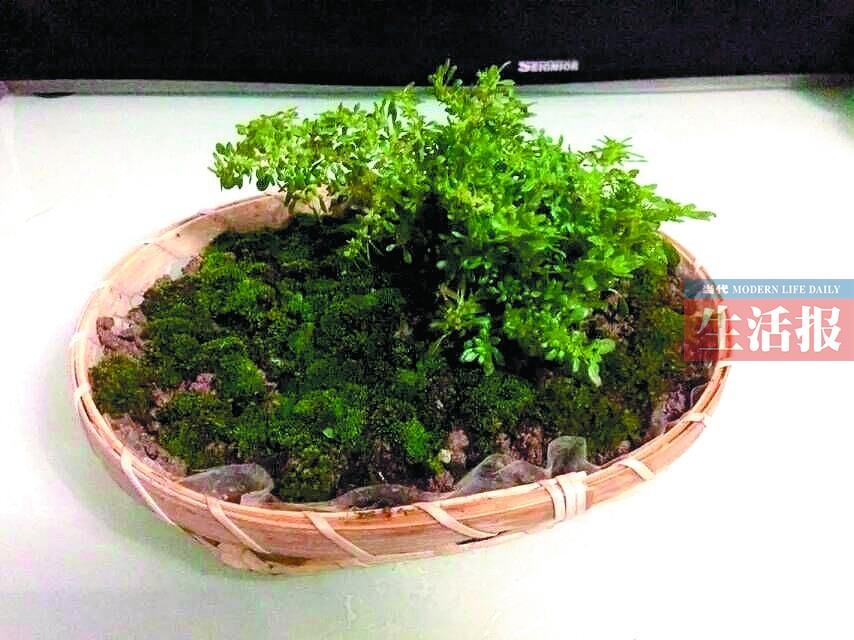 相关新闻 创意植物盆栽 diy学起来 苔藓盆栽  步骤:1.