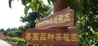 中新网:十里花卉长廊成生态地标