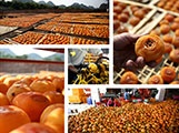 The Growth Story of Gongcheng Dried Persimmons with
