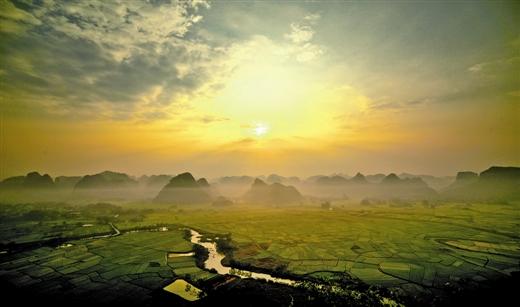 林县水稻成熟,田野一片金黄,一派丰收景象.这是该县三里镇的田