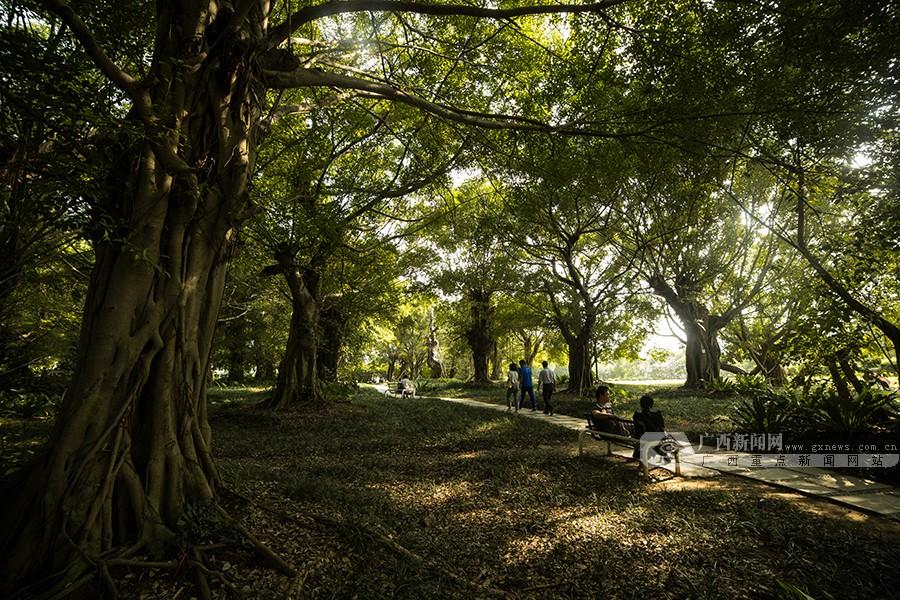 高清:漫步南湖林荫间 赏多彩之秋