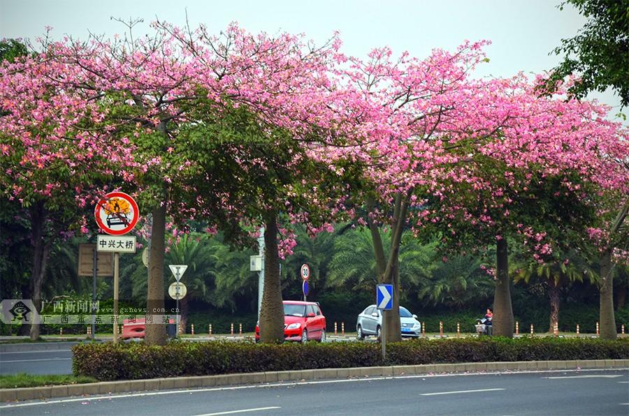 高清:繁花簇簇迷人眼 邕城秋日胜春朝