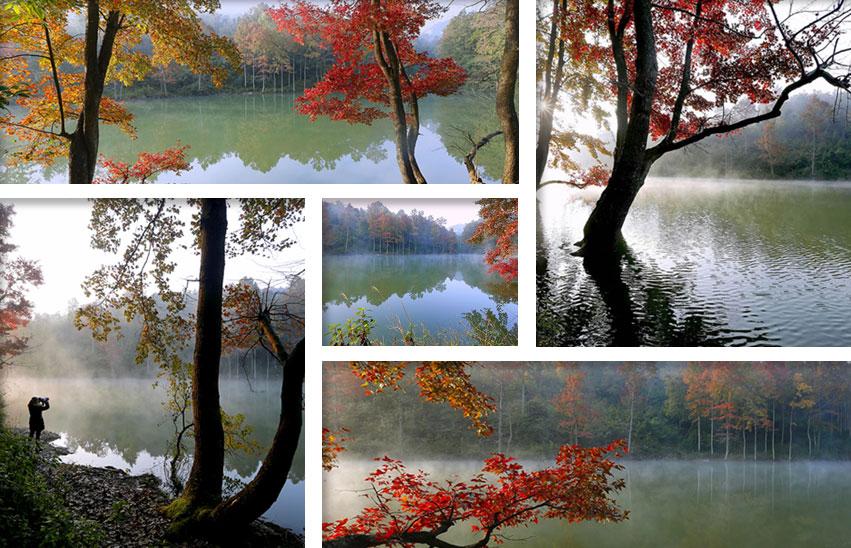 """高清图集:美丽的冬季""""枫""""景线"""