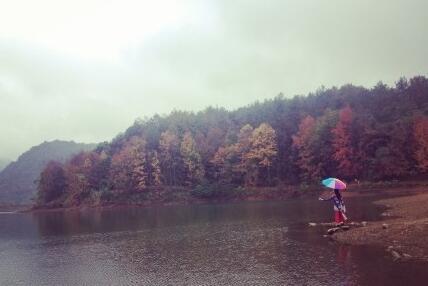 烟雨中的德保红叶森林公园