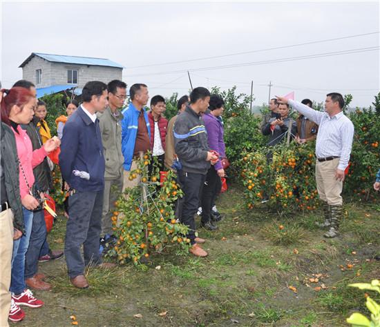 新桥镇举行农家乐旅游推介活动