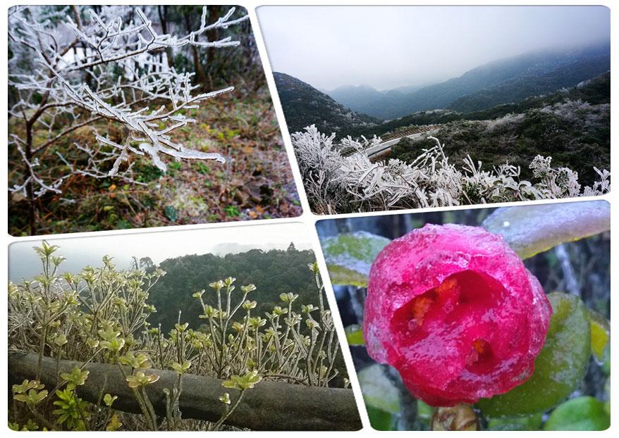 高清:寒潮来袭 冰挂雾凇大明山雪景妖娆