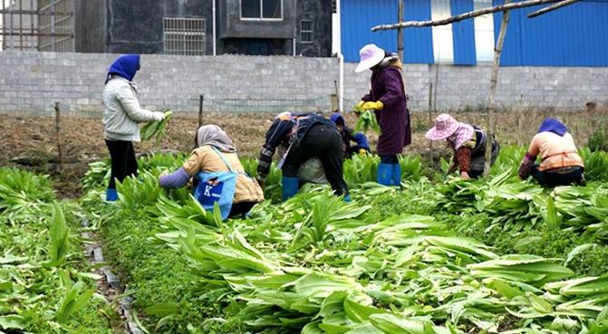 广西遇低温农业受灾重