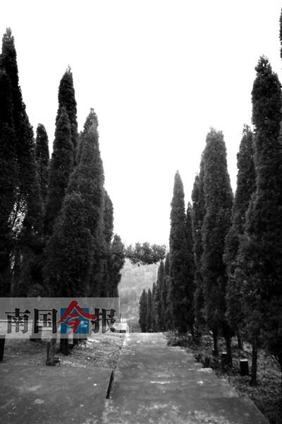 """""""长青公墓管理处副主任张茂指着一排桂花树下的墓碑告诉记者,长青公墓"""