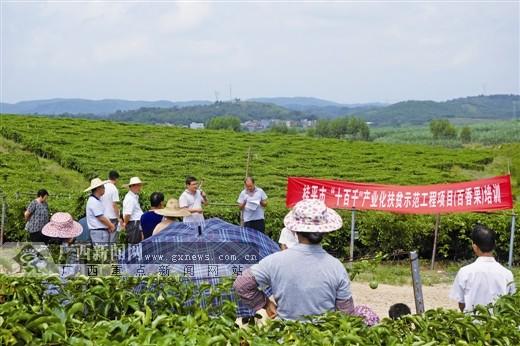 """"""" 桂平将充分利用龙头企业,带动贫困家庭种养,并解决农产品的销路问题"""