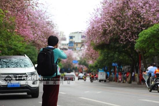 漫步柳州街头 与紫荆花来一场浪漫的约会
